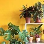 Apartment Indoor Gardening With Tropic Indoor Plants 62