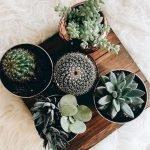 Apartment Indoor Gardening With Tropic Indoor Plants 63
