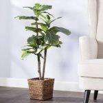 Apartment Indoor Gardening With Tropic Indoor Plants 64