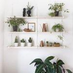 Apartment Indoor Gardening With Tropic Indoor Plants 67