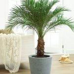 Apartment Indoor Gardening With Tropic Indoor Plants 68