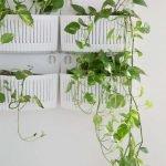 Apartment Indoor Gardening With Tropic Indoor Plants 69