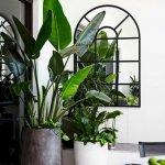 Apartment Indoor Gardening With Tropic Indoor Plants 70