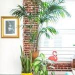 Apartment Indoor Gardening With Tropic Indoor Plants 71
