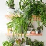 Apartment Indoor Gardening With Tropic Indoor Plants 73