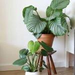 Apartment Indoor Gardening With Tropic Indoor Plants 75