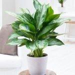 Apartment Indoor Gardening With Tropic Indoor Plants 76