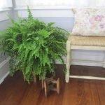 Apartment Indoor Gardening With Tropic Indoor Plants 77