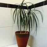 Apartment Indoor Gardening With Tropic Indoor Plants 79