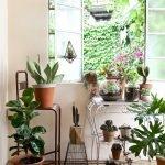 Apartment Indoor Gardening With Tropic Indoor Plants 80