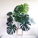 Apartment Indoor Gardening With Tropic Indoor Plants 84