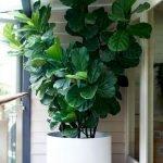 Apartment Indoor Gardening With Tropic Indoor Plants 87