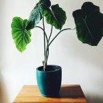 Apartment Indoor Gardening With Tropic Indoor Plants 88