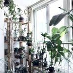 Apartment Indoor Gardening With Tropic Indoor Plants 89