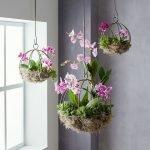 Apartment Indoor Gardening With Tropic Indoor Plants 90