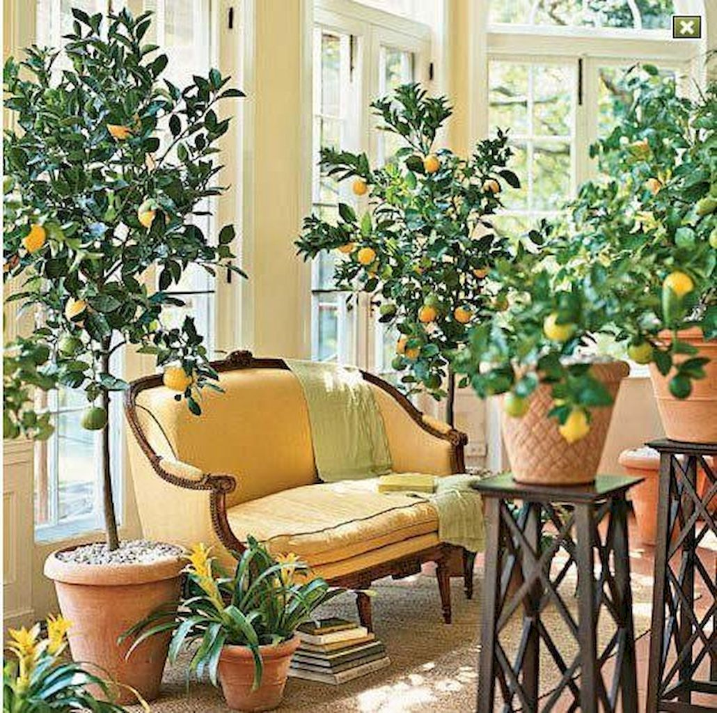 Apartment Indoor Gardening With Tropic Indoor Plants 92