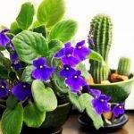 Apartment Indoor Gardening With Tropic Indoor Plants 93