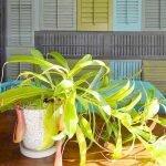 Apartment Indoor Gardening With Tropic Indoor Plants 94