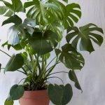 Apartment Indoor Gardening With Tropic Indoor Plants 96