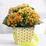Apartment Indoor Gardening With Tropic Indoor Plants 97