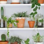 Apartment Indoor Gardening With Tropic Indoor Plants 100