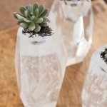 Apartment Indoor Gardening With Tropic Indoor Plants 101