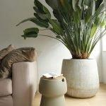 Apartment Indoor Gardening With Tropic Indoor Plants 102