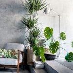 Apartment Indoor Gardening With Tropic Indoor Plants 103