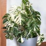 Apartment Indoor Gardening With Tropic Indoor Plants 104