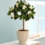 Apartment Indoor Gardening With Tropic Indoor Plants 106