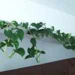Apartment Indoor Gardening With Tropic Indoor Plants 107