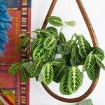 Apartment Indoor Gardening With Tropic Indoor Plants 108