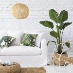 Apartment Indoor Gardening With Tropic Indoor Plants 112