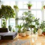 Apartment Indoor Gardening With Tropic Indoor Plants 114