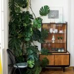 Apartment Indoor Gardening With Tropic Indoor Plants 115