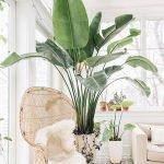 Apartment Indoor Gardening With Tropic Indoor Plants 117