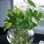 Apartment Indoor Gardening With Tropic Indoor Plants 118