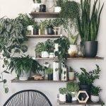 Apartment Indoor Gardening With Tropic Indoor Plants 119
