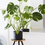 Apartment Indoor Gardening With Tropic Indoor Plants 120