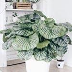 Apartment Indoor Gardening With Tropic Indoor Plants 123
