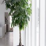 Apartment Indoor Gardening With Tropic Indoor Plants 124