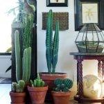 Apartment Indoor Gardening With Tropic Indoor Plants 125