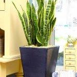 Apartment Indoor Gardening With Tropic Indoor Plants 126