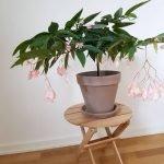 Apartment Indoor Gardening With Tropic Indoor Plants 127