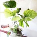 Apartment Indoor Gardening With Tropic Indoor Plants 130