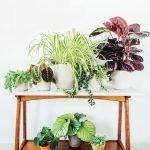 Apartment Indoor Gardening With Tropic Indoor Plants 131