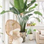 Apartment Indoor Gardening With Tropic Indoor Plants 133