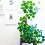 Apartment Indoor Gardening With Tropic Indoor Plants 134