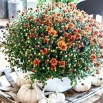 Easy and Inexpensive Fall Decorating Ideas 50