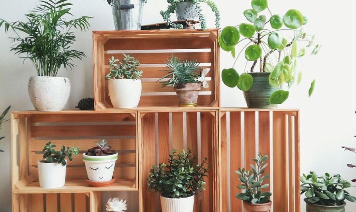 Diy Plant Holder Ideas